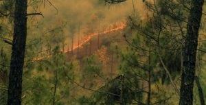 skogsbrand vma